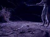 Эти   загадочные   животные  -  1  -  Причудливые   способы   передвижения